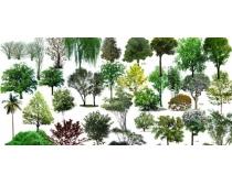 乔木风景树PSD素材