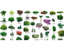 园林树PSD素材