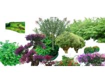 常用乔木绿色植物PSD素材