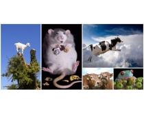 创意动物时时彩娱乐网站