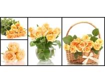 一束玫瑰高清图片