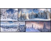 森林雪树风景高清图片