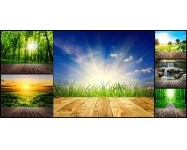 自然森林景色高清图片