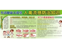 H7N9禽流感预防知识矢量素材