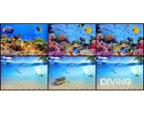 海底世界高清图片