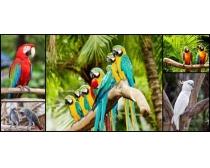 鹦鹉鸟高清图片