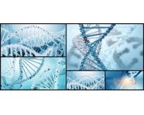 DNA细胞时时彩娱乐网站