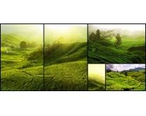 绿色的山景色高清图片