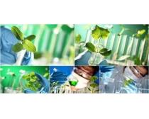 图片素材/绿色植物培植实验图片素材