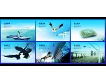 中国风企业文化画册设计PSD素材