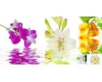 花卉水中倒影高清图片素材