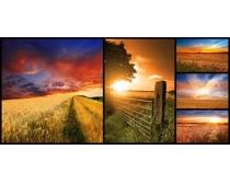夕阳下的田野风景高清图片