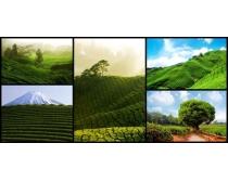 美丽的绿色风景摄影高清图片