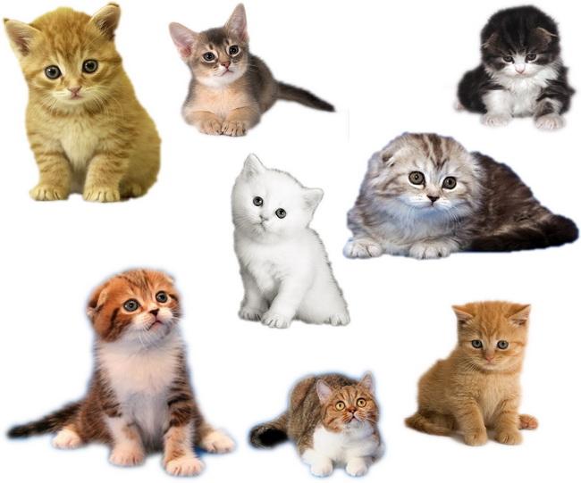 小猫崽可爱图片