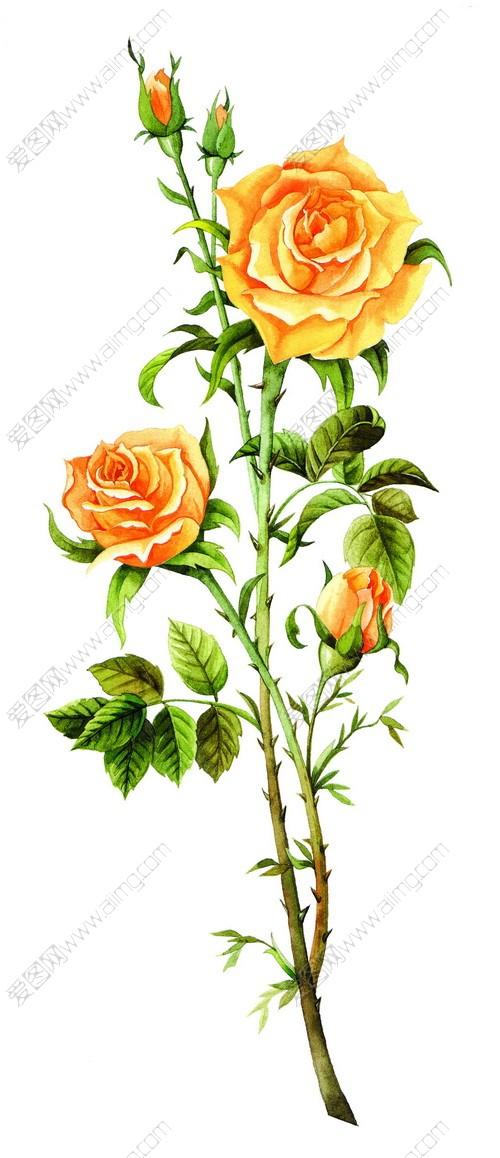 3款手绘玫瑰花psd分层素材