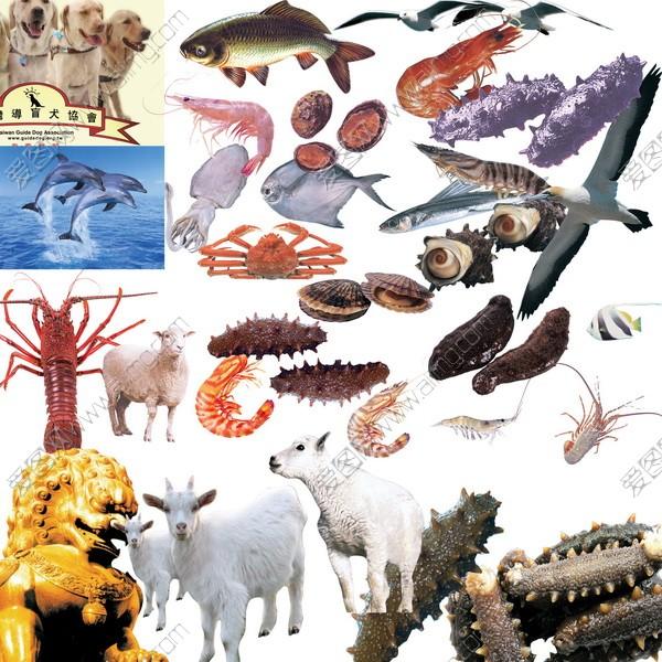 多种动物psd分层素材集