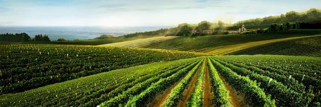 葡萄庄园风景素材 - 爱图网设计图片素材下载