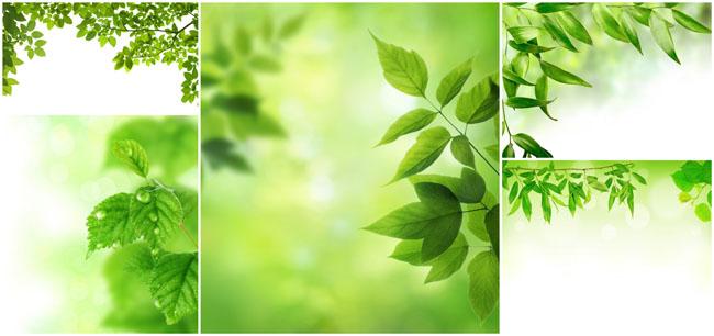 > 素材信息   关键字: 春天树叶树叶背景叶子自然风景水珠树枝高清