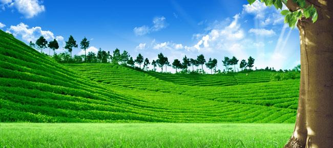 爱图首页 psd素材 自然生态 茶园 蓝天白云 春天 风景 草地 茶叶 茶庄