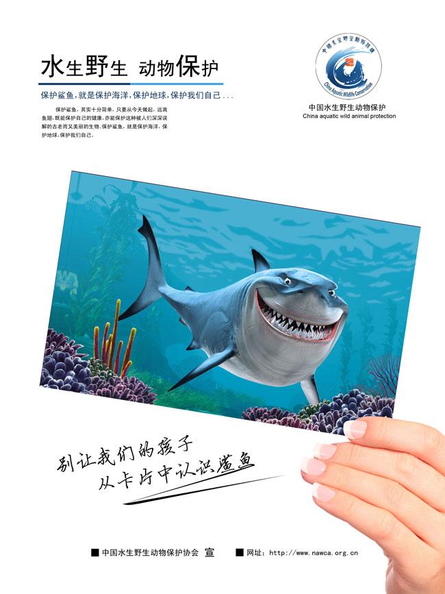 野生水生动物保护保护协会野生水生动物保护海报
