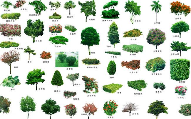 园林配名景观植物集psd素材