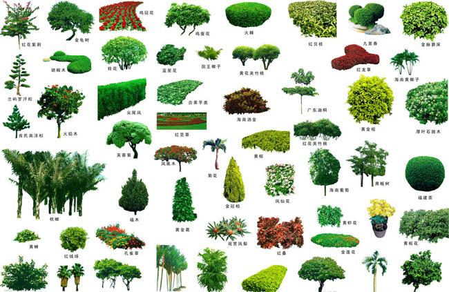 景观植物PSD素材