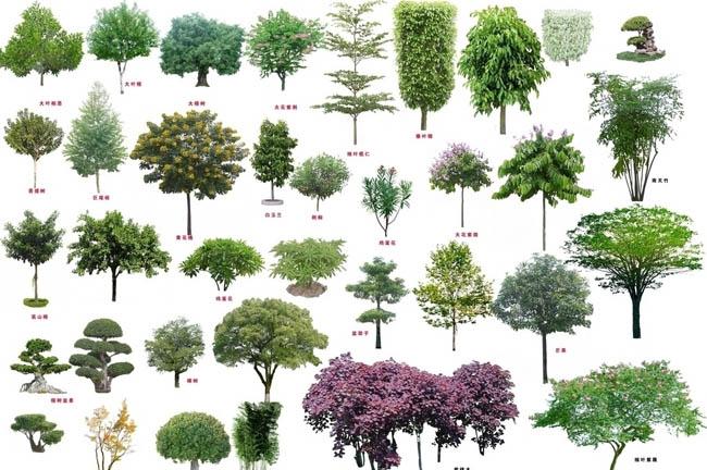 乔灌木园林植物psd素材