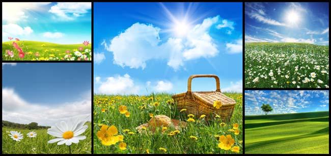 自然花朵风景高清图片